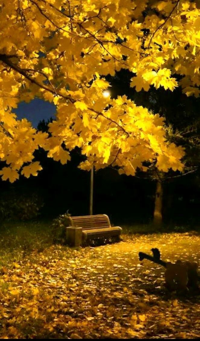 empty autumn bench