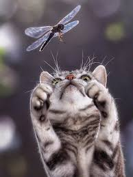 tabby and dragonfly