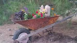 flowers in wheelbarrow